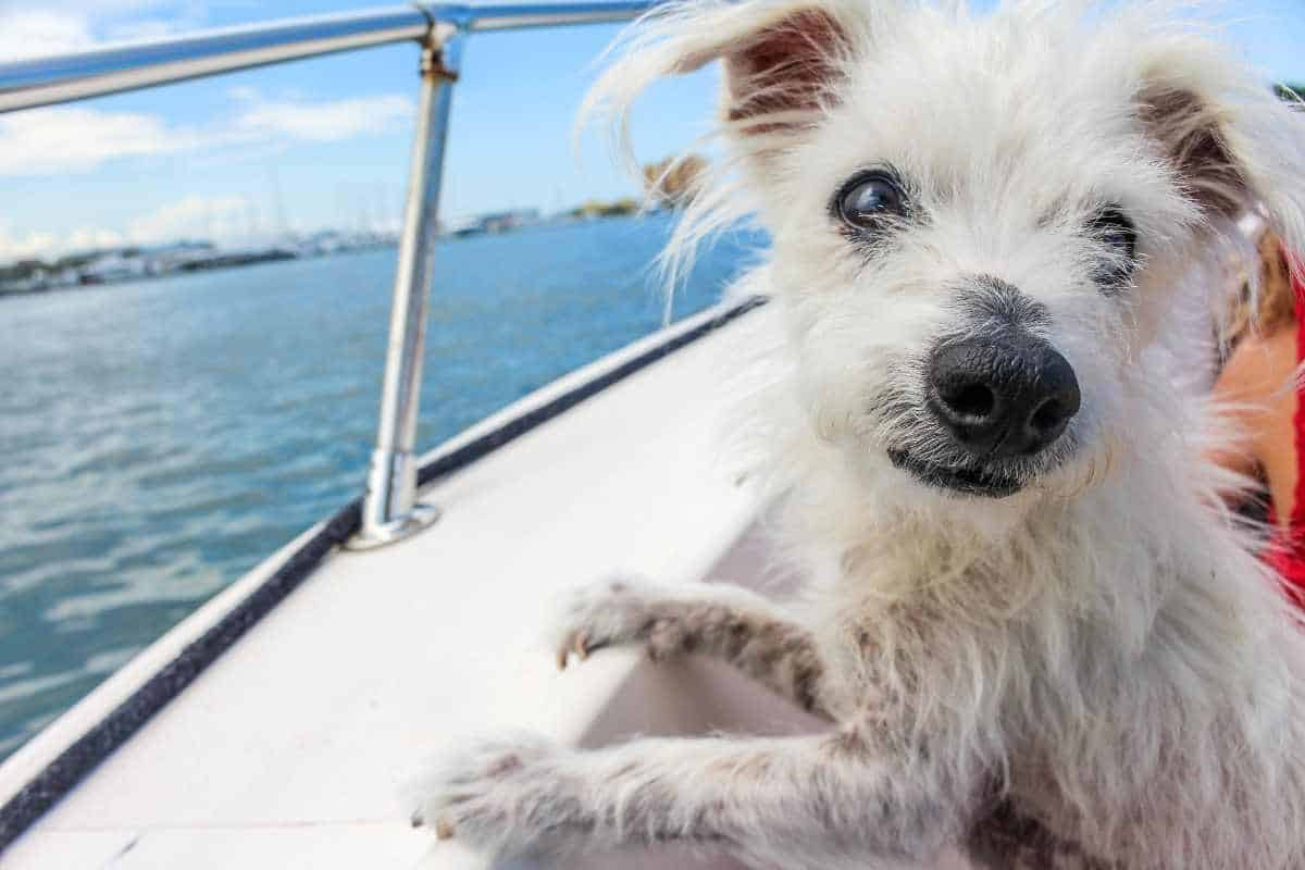 8 Tips for a Smooth Sailing Boat Trip with your Pet